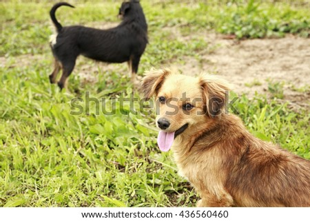 cute dog on the grass - stock photo
