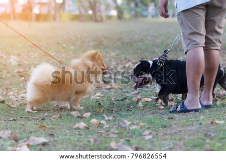 Cute dog playing on grass field with owner