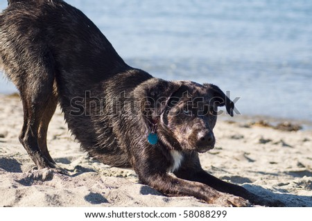 Cute dog playing on the sandy beach by the ocean shore on a beautiful sunny day.