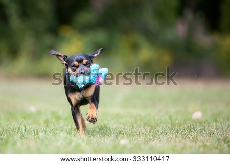 Cute dog playing outside with a toy