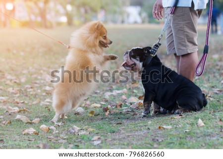 Cute dog playing with love on grass field with owner