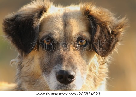 cute dog portrait, close up on furry  head