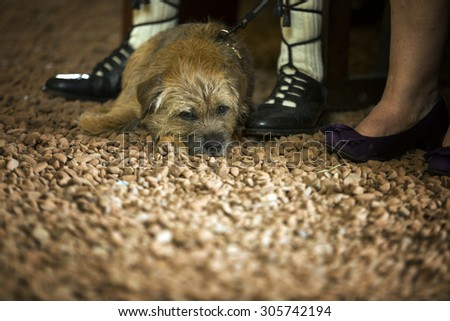 Cute dog relaxing durng a wedding ceremony - stock photo