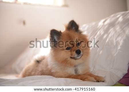 cute dog relaxing on bed
