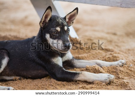 Cute dog relaxing on the sandy beach