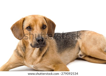 Cute dog resting - stock photo