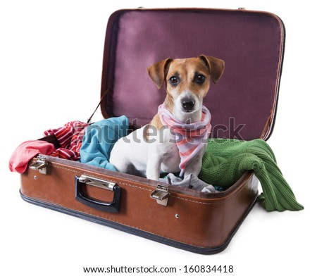 Cute dog sits in a suitcase for traveling with brightly colored things inside of it with a stylish pink scarf around her neck. Take me with you on vacation. White background