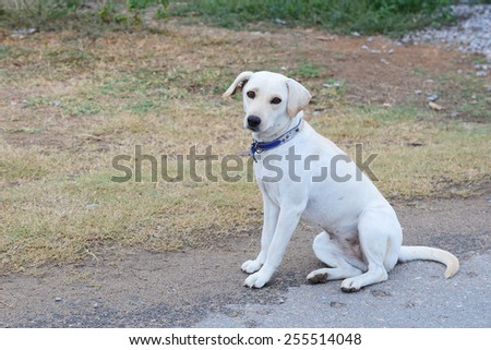 cute dog sitting in grass - stock photo
