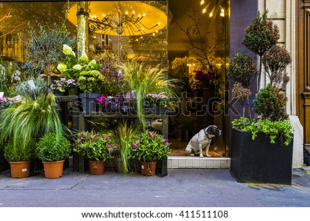 Cute dog sitting in the door of a flower shop in Paris - stock photo