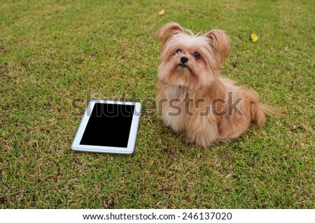 cute dog sitting with empty screen tablet - stock photo