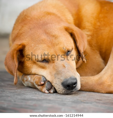 Cute dog sleeping outdoors