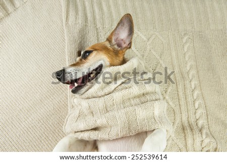 Cute dog smiling in knitted scarf lying on the bed - stock photo