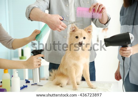 Cute dog Spitz at groomer salon
