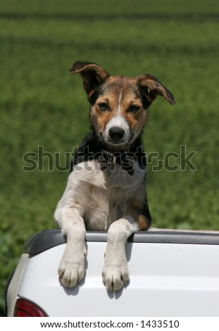 cute dog standing in back of truck