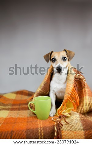 Cute dog to keep warm under the covers. Near cup warm drink in a green cup. Grey background - stock photo