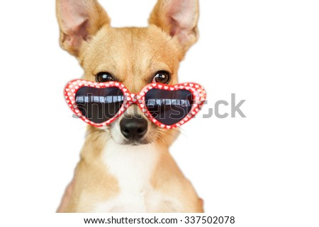 Cute dog with heart sunglasses on white background - stock photo