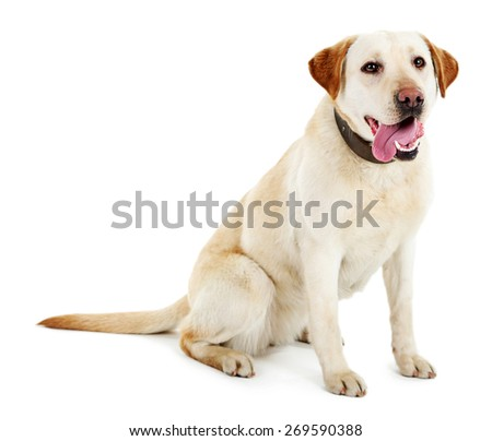 Cute dog with leash isolated on white background