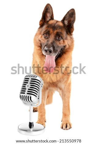 Cute dog with microphone isolated on white - stock photo