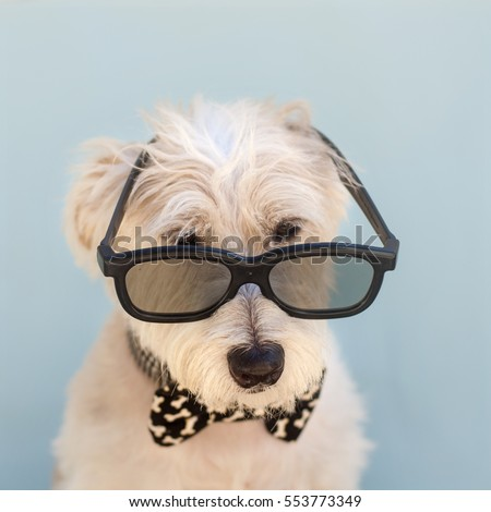 Wonderful Terrier Bow Adorable Dog - stock-photo-cute-dog-with-neck-bow-wearing-glasses-sitting-and-looking-at-the-camera-on-blue-background-jack-553773349  Graphic_496248  .jpg