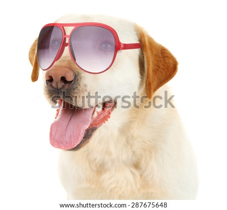 Cute dog with sunglasses isolated on white - stock photo
