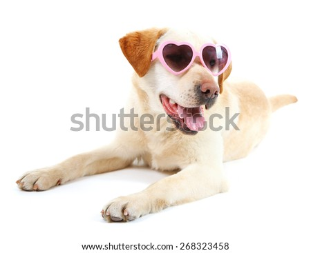 Cute dog with sunglasses isolated on white background - stock photo