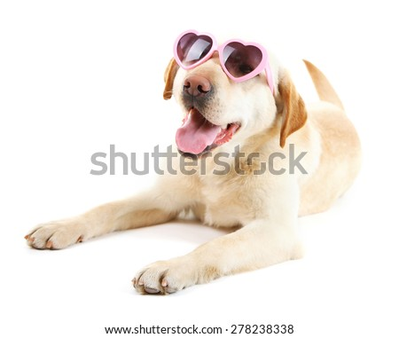 Cute dog with sunglasses isolated on white background