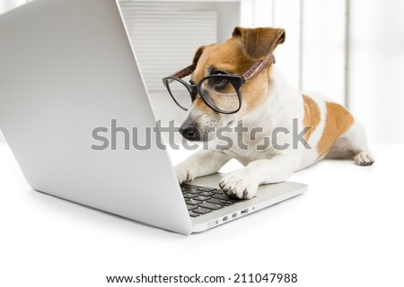 Cute dog works in the office at the computer. Concentration and strictly looking at the screen - stock photo