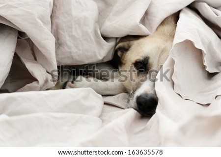 cute dog wrapped in fabric - stock photo