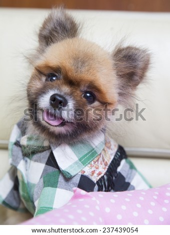 cute dogs - stock photo