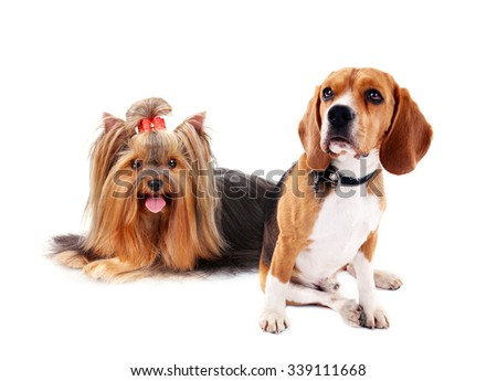 Cute dogs isolated on white - stock photo