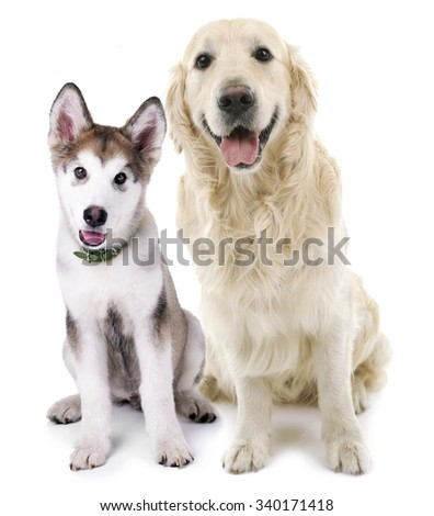 Cute dogs isolated on white