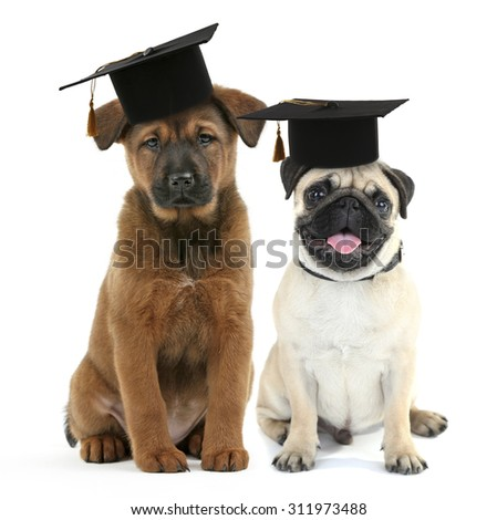 Cute dogs  with grad hats isolated on white - education concept - stock photo