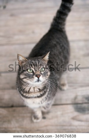 Cute domestic cat outside standing on wooden floor