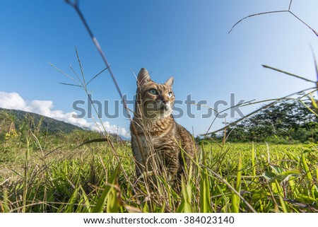 Cute domestic cat walk in the outdoor. - stock photo