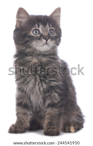 Cute domestic kitten isolated