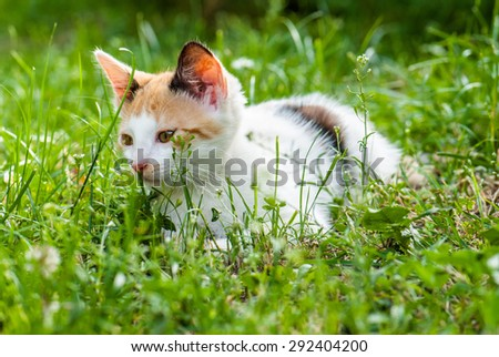Cute domestic kitten lying on the grass/ Cute kitten