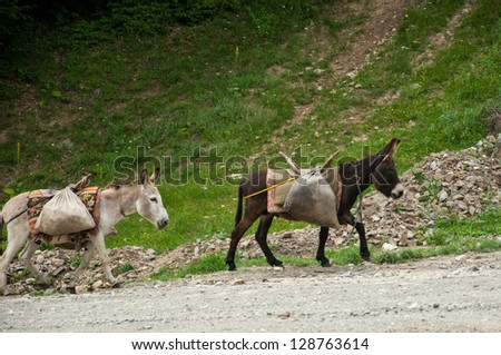 Cute donkeys carrying heavy supplies up the mountain - stock photo