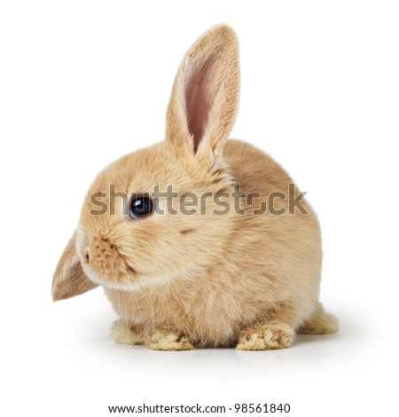 Cute easter rabbit - stock photo
