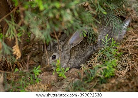 Cute easter rabbit bunny hiding in garden - stock photo