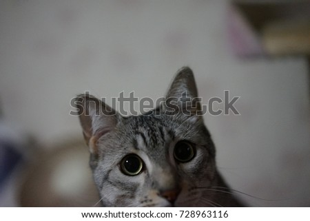 https://thumb1.shutterstock.com/display_pic_with_logo/167494286/728963116/stock-photo-cute-egyptian-mau-728963116.jpg