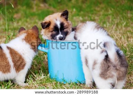cute Elo puppy sitting in a saucepan - stock photo