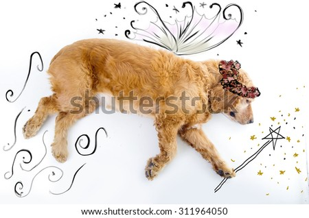 Cute English Cocker Spaniel fairy puppy in front of a white background with wings and magic wand sketch. - stock photo
