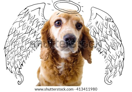 Cute English Cocker Spaniel puppy in front of a white background with angel wings and halo sketch - stock photo