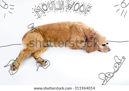 Cute English Cocker Spaniel puppy in front of a white background with moulin rouge inspired silly sketch. - stock photo