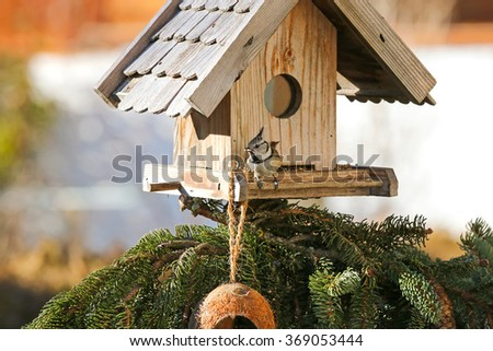Cute European Crested Tit bird (Lophophanes cristatus) eating hemp seeds on the wooden bird feeder in the winter in Austria - stock photo