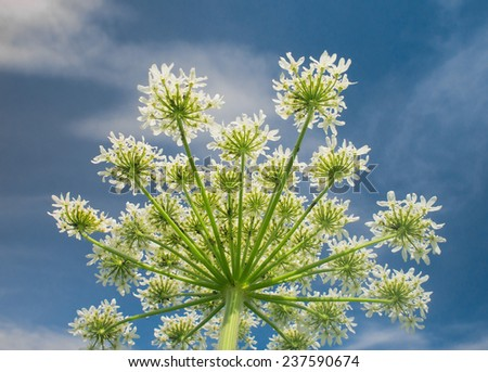 Cute Flower   - stock photo