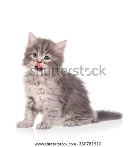 Cute fluffy grey kitten isolated over white background - stock photo
