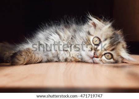 cute fluffy kitten basking in the sun in the summer