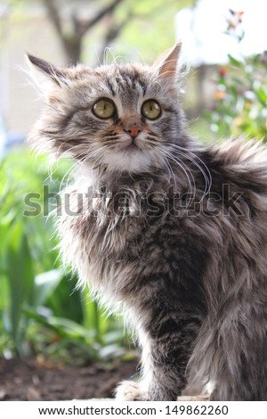 Cute fluffy kitten in the garden. Animal, mammal, domestic cat. - stock photo