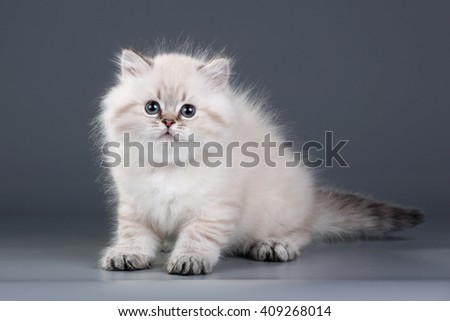 Cute fluffy kitten on a black background